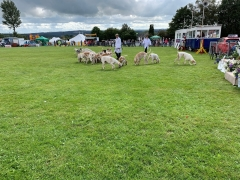 Ipstones Agricultural Show 2019